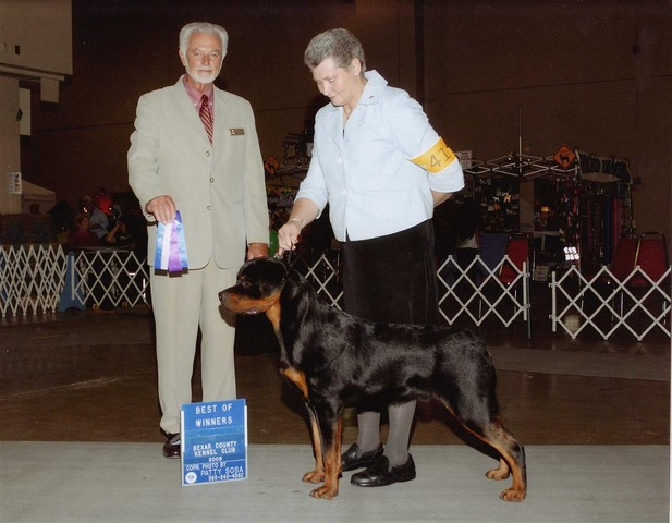 Shown winning a 5 Point Major from the 6-9 Puppy Class, River City Circuit.