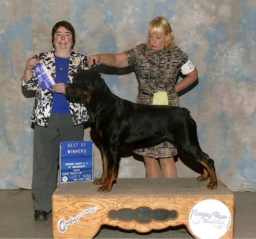 Best of Winners at Singing River Kennel Club - 12 Months