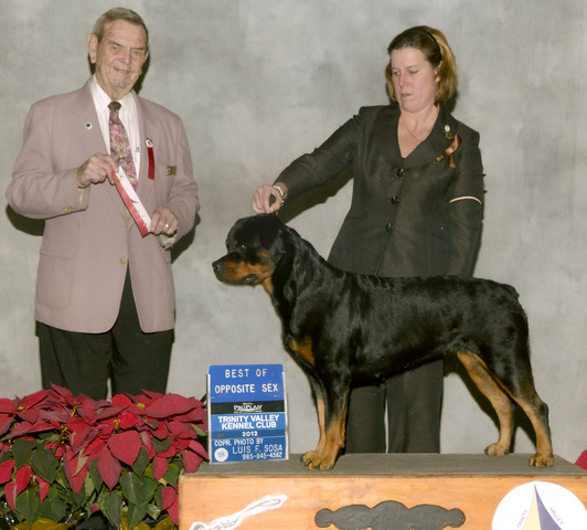 GCH Blackwood Rosalie